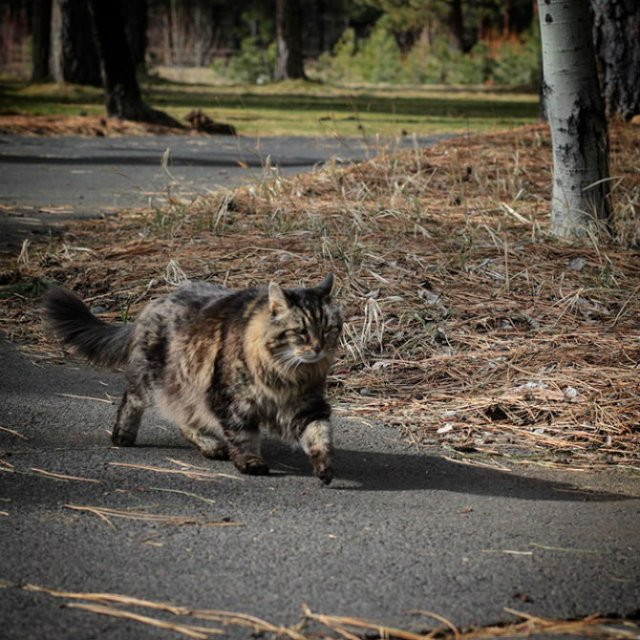 Corduroy, cea mai in varsta pisica din lume - Poza 3