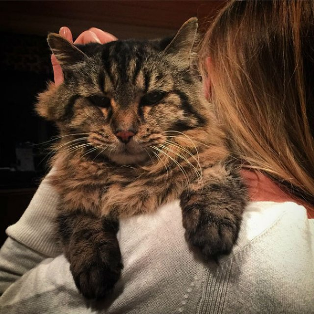 Corduroy, cea mai in varsta pisica din lume - Poza 4