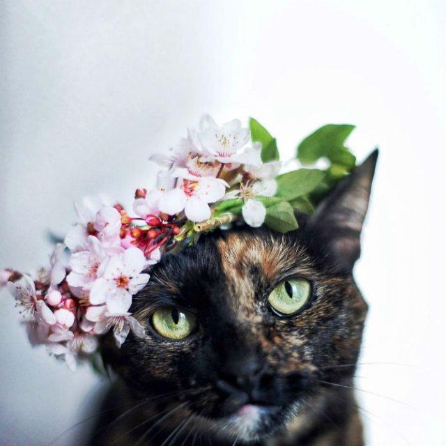 Plimabrea pisicii multicolore prin patru anotimpuri - Poza 1