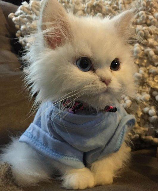 13 Pisicute care iti vor insenina ziua - Poza 3