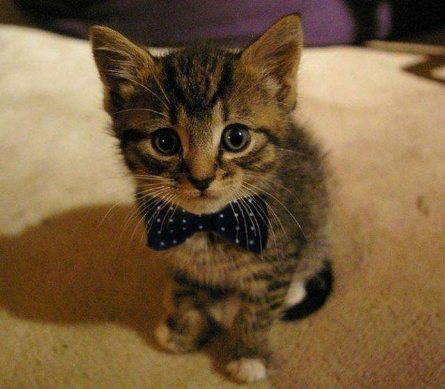 13 Pisicute care iti vor insenina ziua - Poza 4