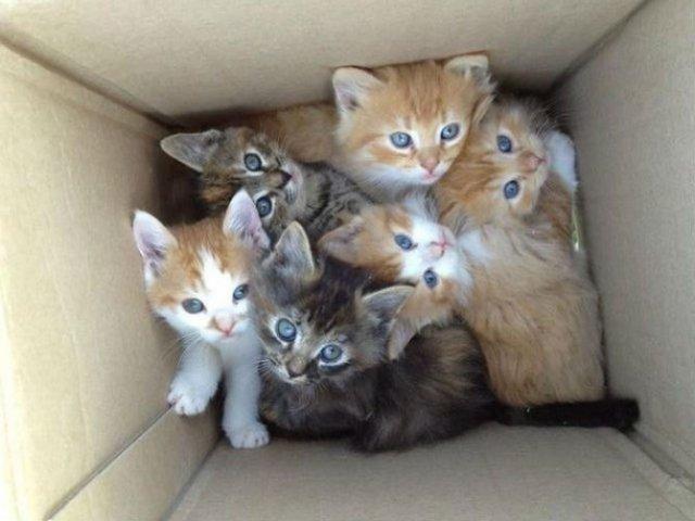 13 Pisicute care iti vor insenina ziua - Poza 5