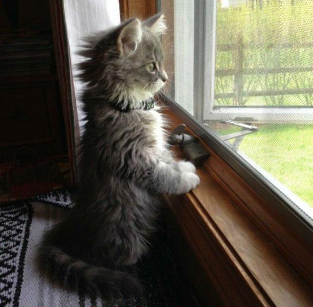 13 Pisicute care iti vor insenina ziua - Poza 7