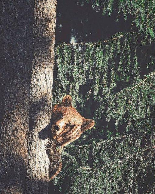 Sufletul padurii, intr-un pictorial deosebit - Poza 6