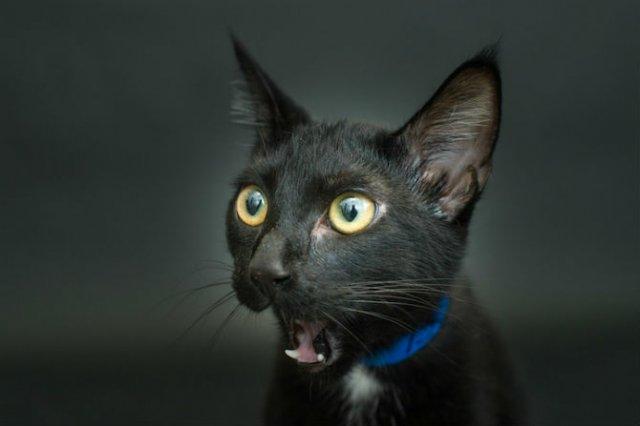 Proiectul pisicii negre: Cele mai frumoase pisicute fara stapan - Poza 8
