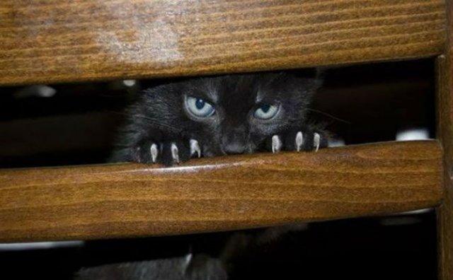 Poze haioase cu pisici expresive - Poza 10