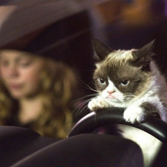 Poze haioase cu pisici expresive - Poza 12