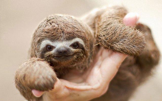 Cele mai simpatice animale zambarete - Poza 5