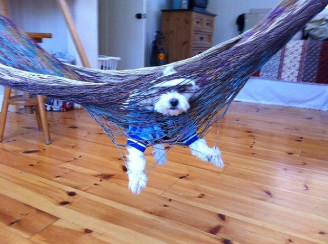 Cele mai trasnite lucruri pe care cainii le fac