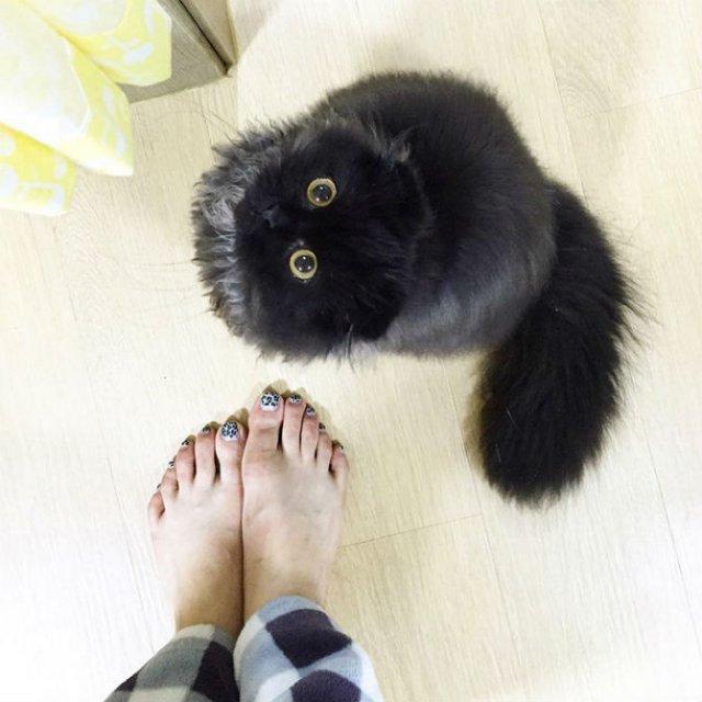 Gimo, ghemotocul de blana cu ochi hipnotizanti - Poza 4