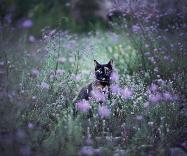 Plimabrea pisicii multicolore prin patru anotimpuri - Poza 2