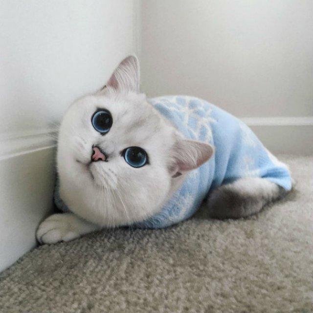 Pisicuta cu cei mai frumosi ochi din lume - Poza 13