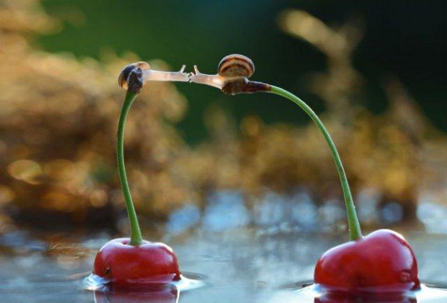 Dragostea pluteste in aer: Tandrete in lumea animala - Poza 11