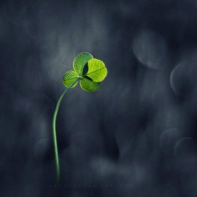 Florile ochilor mei: Picturi din sanul naturii - Poza 11