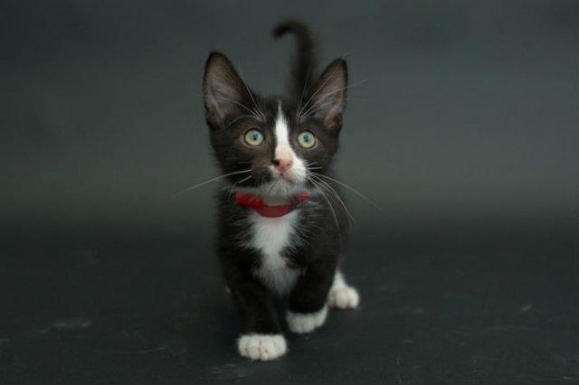 Proiectul pisicii negre: Cele mai frumoase pisicute fara stapan - Poza 7