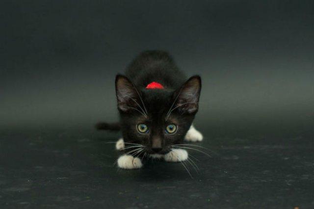 Proiectul pisicii negre: Cele mai frumoase pisicute fara stapan - Poza 5