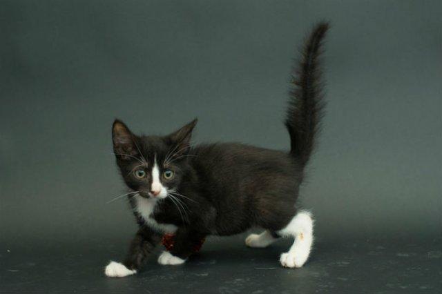 Proiectul pisicii negre: Cele mai frumoase pisicute fara stapan - Poza 6