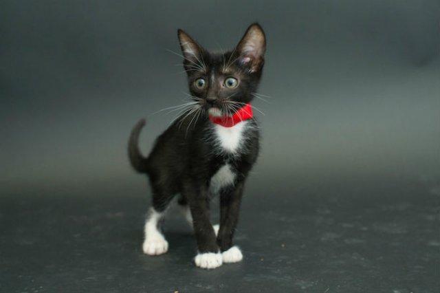 Proiectul pisicii negre: Cele mai frumoase pisicute fara stapan - Poza 1