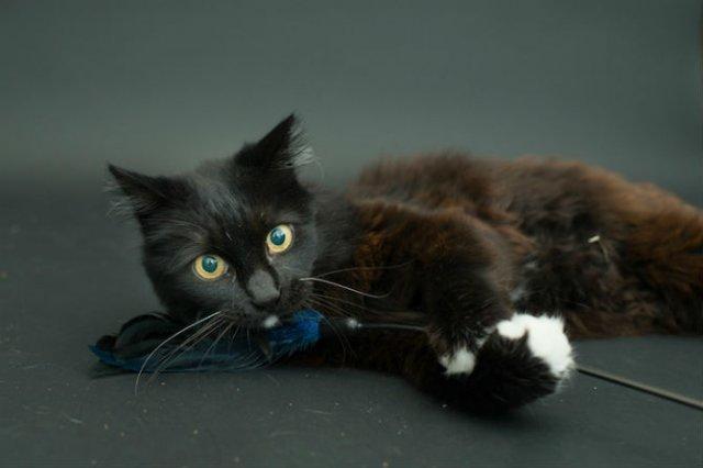 Proiectul pisicii negre: Cele mai frumoase pisicute fara stapan - Poza 2