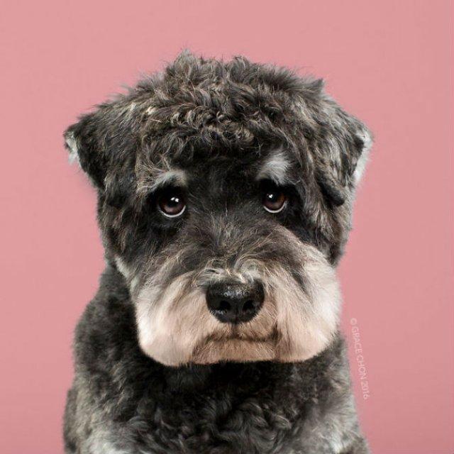 Unul mai cochet ca altul: Tunsori canine cu influente asiatice - Poza 8