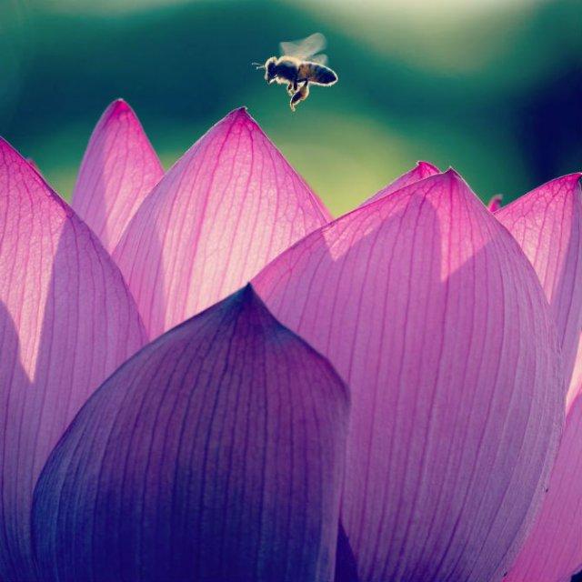 Natura si poezie, in poze superbe - Poza 11