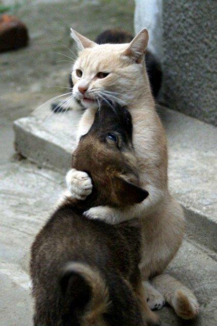 Poze haioase cu pisici expresive - Poza 11