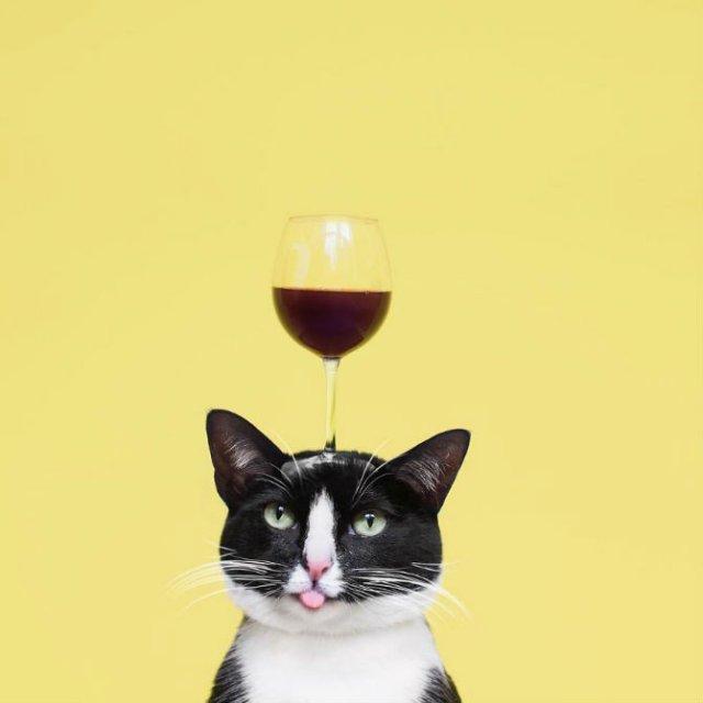 Cheeto, o pisica haioasa, intr-un pictorial trasnit - Poza 18