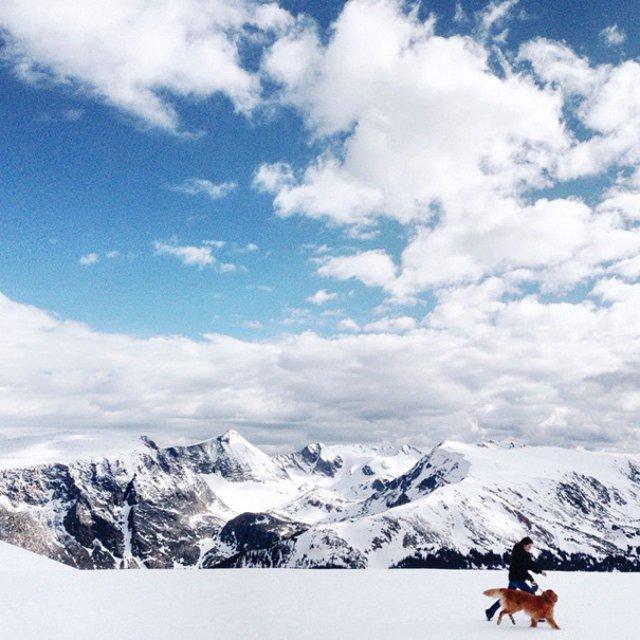 Aventurile epice ale lui Aspen, retrieverul hoinar - Poza 13