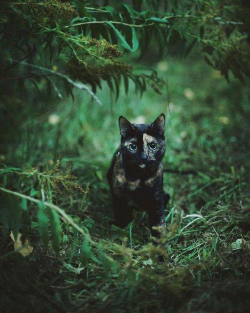 Plimabrea pisicii multicolore prin patru anotimpuri - Poza 7
