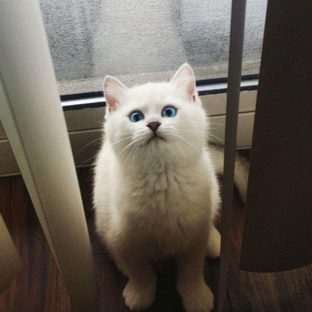 Pisicuta cu cei mai frumosi ochi din lume - Poza 14
