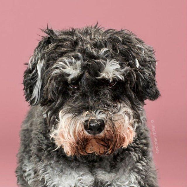 Unul mai cochet ca altul: Tunsori canine cu influente asiatice - Poza 7