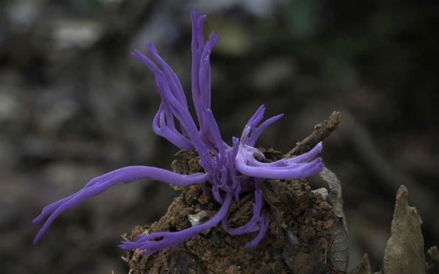 Cele mai ciudate ciuperci din lume - Poza 5