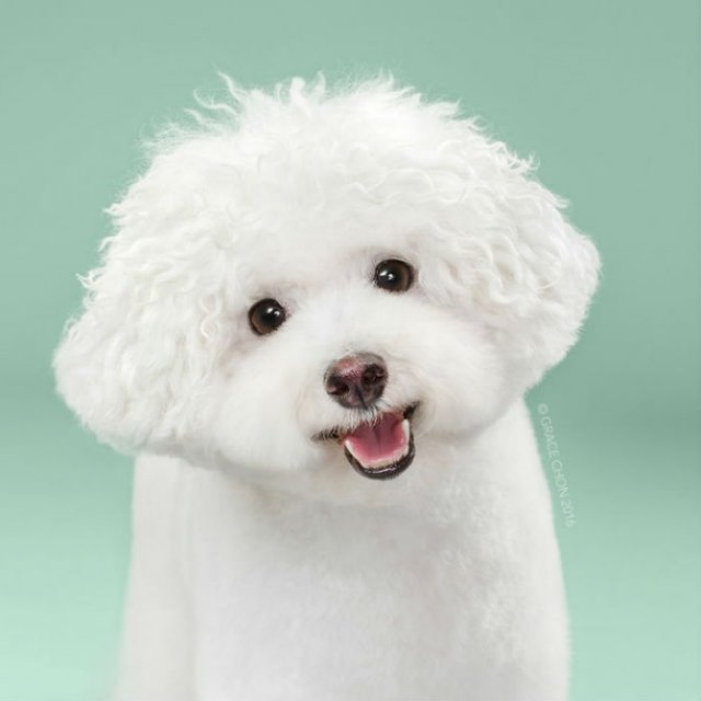 Unul mai cochet ca altul: Tunsori canine cu influente asiatice - Poza 6
