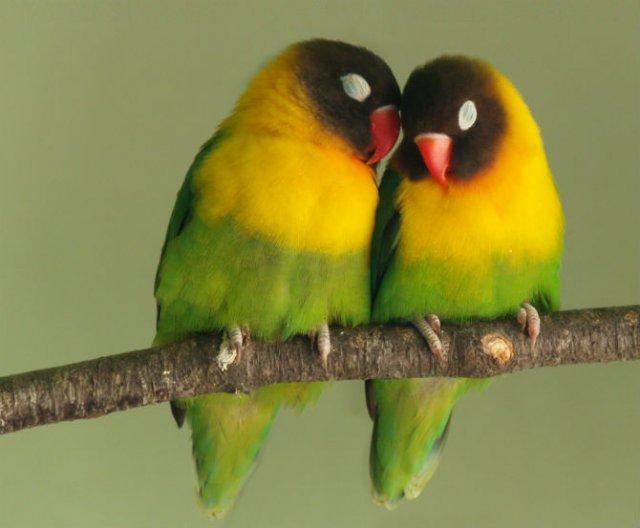 Dragostea pluteste in aer: Tandrete in lumea animala - Poza 10
