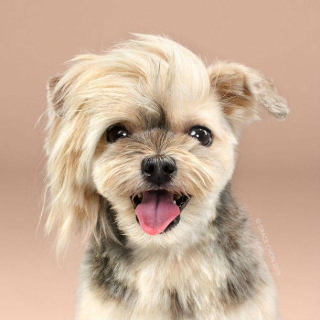 Unul mai cochet ca altul: Tunsori canine cu influente asiatice - Poza 4
