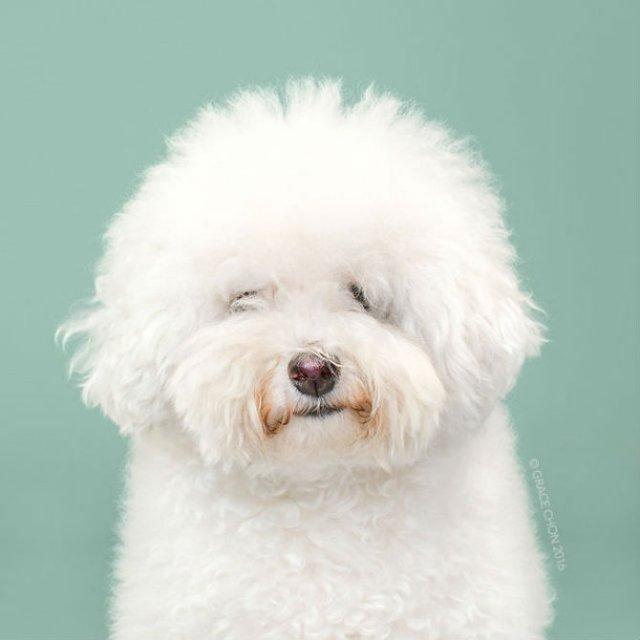 Unul mai cochet ca altul: Tunsori canine cu influente asiatice - Poza 5
