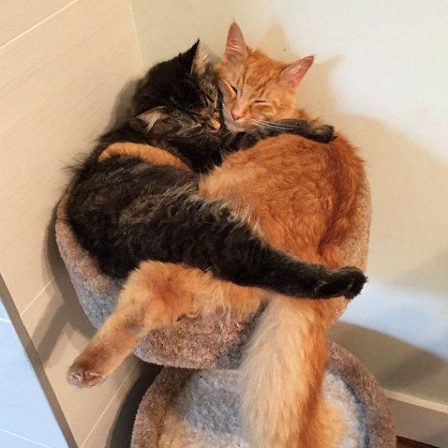 Doua prietene inseparabile, in poze dragalase - Poza 4