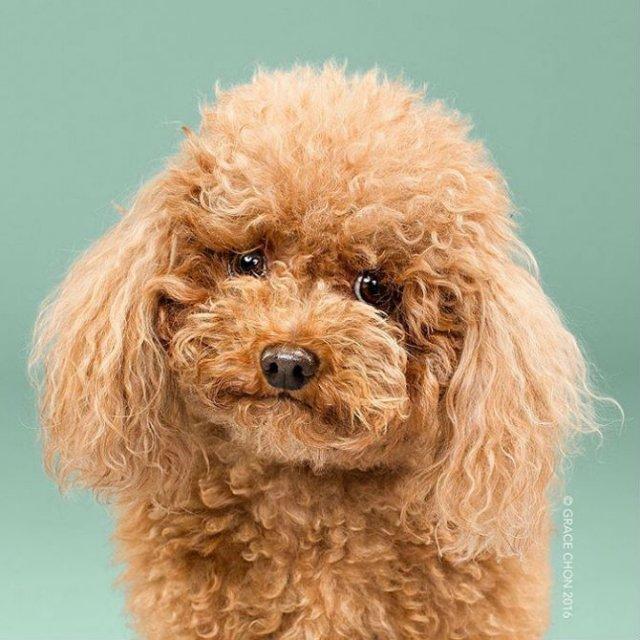 Unul mai cochet ca altul: Tunsori canine cu influente asiatice - Poza 1