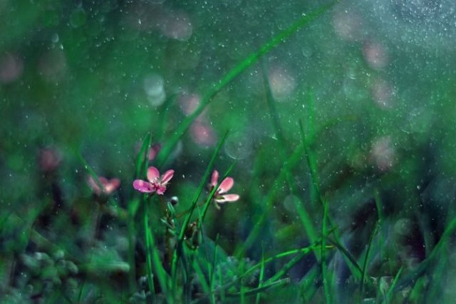 Florile ochilor mei: Picturi din sanul naturii - Poza 10
