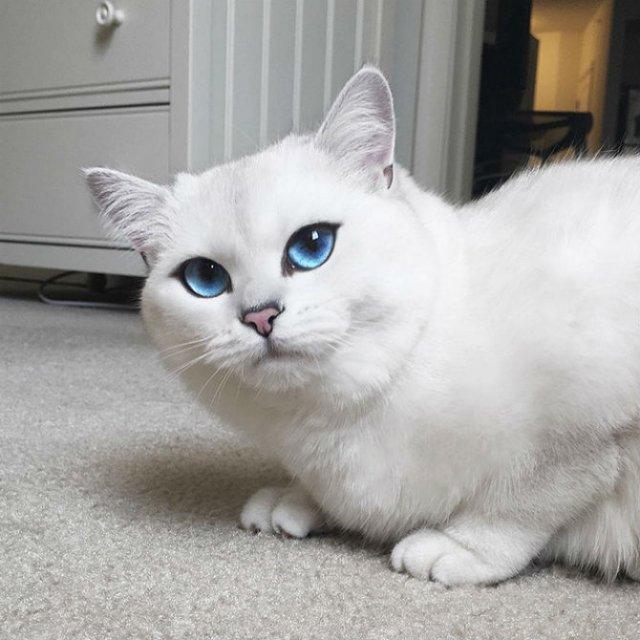 Pisicuta cu cei mai frumosi ochi din lume - Poza 15