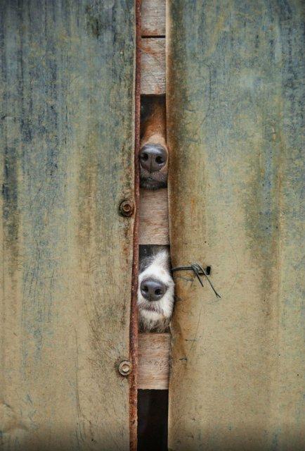 Caini haios de curiosi, in poze trasnite - Poza 2