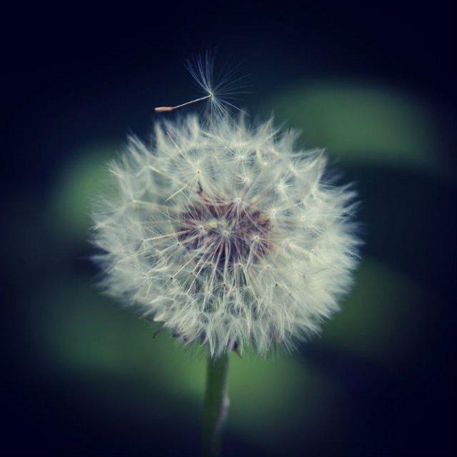Natura si poezie, in poze superbe - Poza 10