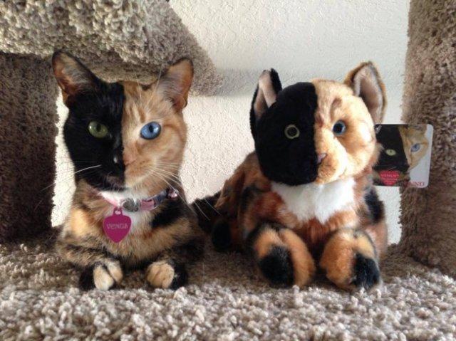 Felina cu doua fete de o frumusete rara
