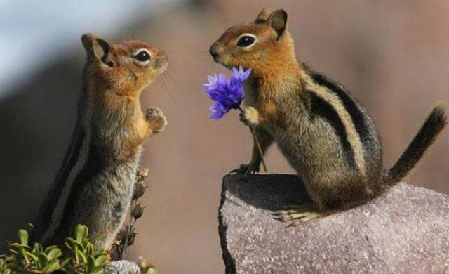 Dragostea pluteste in aer: Tandrete in lumea animala - Poza 5