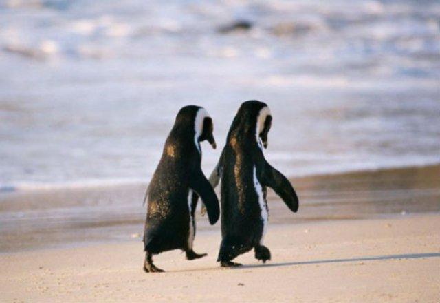 Dragostea pluteste in aer: Tandrete in lumea animala - Poza 6