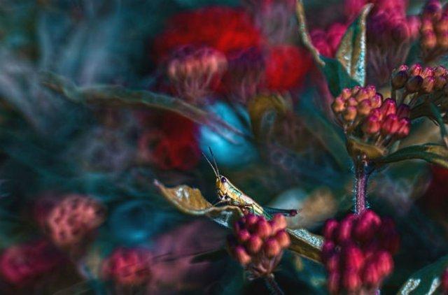 Lumea de basm a insectelor, in fotografii macro - Poza 13