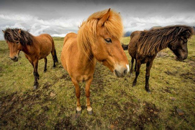 Frumusetea poetica a Islandei, in poze superbe - Poza 15
