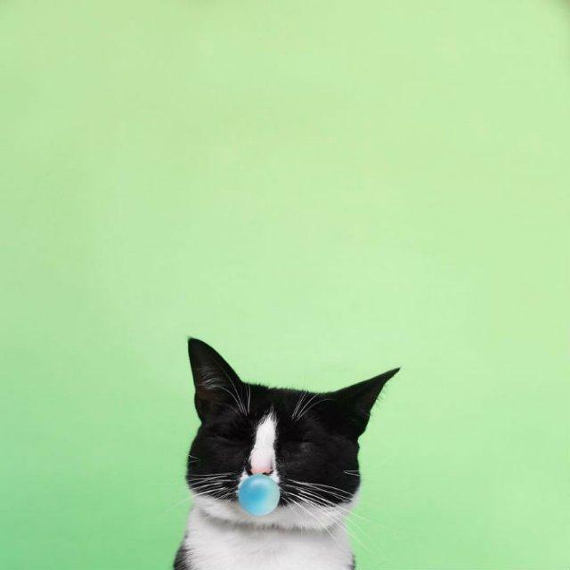 Cheeto, o pisica haioasa, intr-un pictorial trasnit - Poza 17