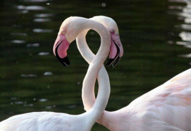 Dragostea pluteste in aer: Tandrete in lumea animala - Poza 23