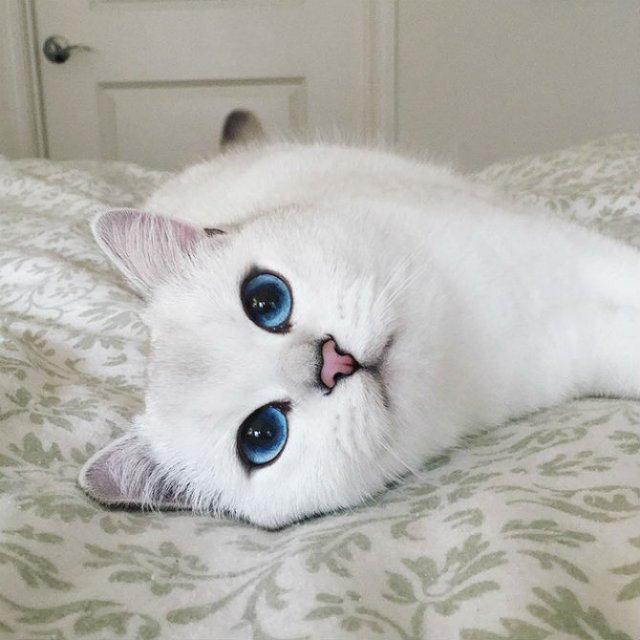 Pisicuta cu cei mai frumosi ochi din lume - Poza 16